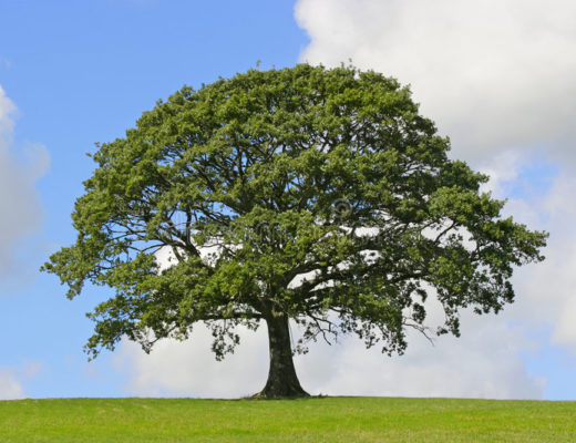 Learn english story book pdf-The Large Tree.